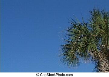 ciel, palmier