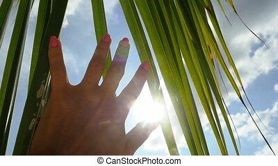 ciel, vacances, lent, feuille, concept., main, sun., clair, exotique, soleil, mouvement, femme, paume, contre, toucher, lentille, arrière-plan bleu, effets, femme, hd, flamme, clouds., apprécier