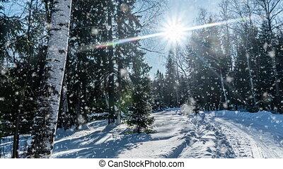 cinemagraph, temps, forêt, lumière, jour, tomber, nature, clair, froid, arbres, paysage, mood., hiver, ensoleillé, boucle, neige blanc, vidéo