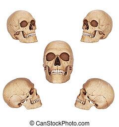 cinq, différent, crânes, vue