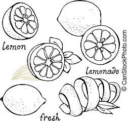 citrus, ensemble, citron, vecteur
