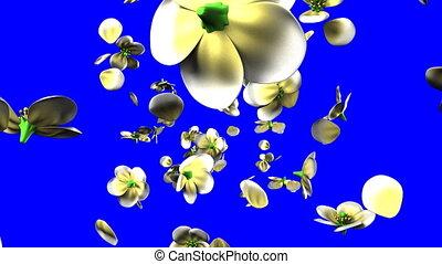 clã©, fleurs blanches, bleu, chroma