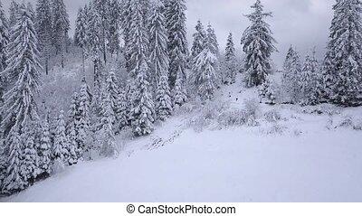 clair, neigeux, vol, sur, speeds., vidéo, temps, forest., conifère, 3, glacial, différent, 1, montagne