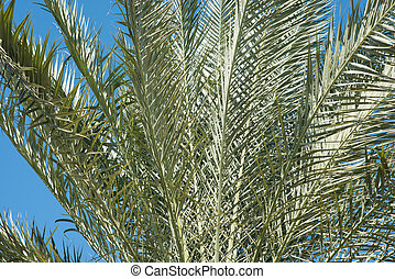 close-up., leaf., palmiers, fond