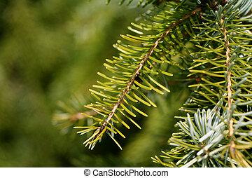 closeup, arbre soigné