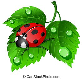 coccinelle, feuille