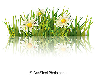 coccinelle, herbe, vert