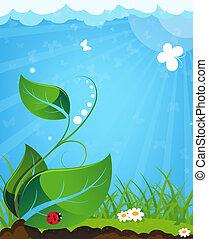 coccinelle, plante, jeune