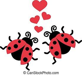 coccinelles, amour, deux