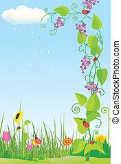 coccinelles, fleur, pré