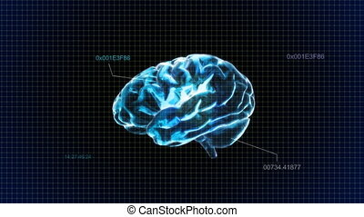 code, bleu, cerveau