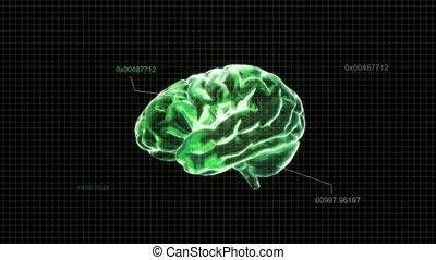 code, cerveau, vert