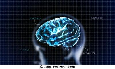 code, tête, bleu, cerveau