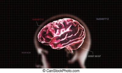 code, tête, cerveau, rouges