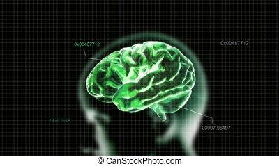 code, tête, cerveau, vert
