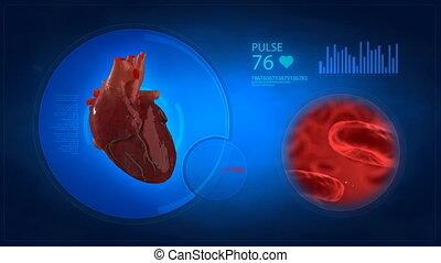 coeur, exposer, monde médical, humain, bl