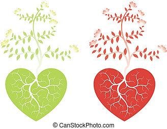 coeur, plante