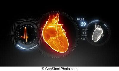 coeur, trace pouls, 2, humain