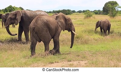 coffre, grand, passes, grattements, éléphant, sien, oreille