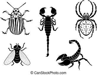 coléoptère, mouche, scorpion, araignés, pomme terre