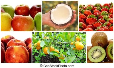 coll, fruit, divers, arbres, fruits