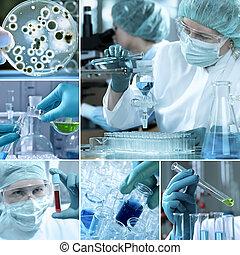 collage, laboratoire