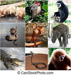collage, photos, neuf animaux, thaïlande
