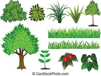 collection, arbre, plante