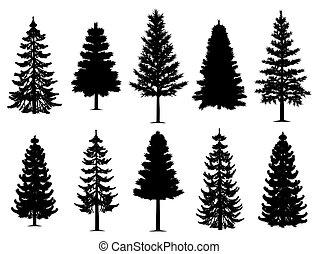 collection, arbres, sapin, pin