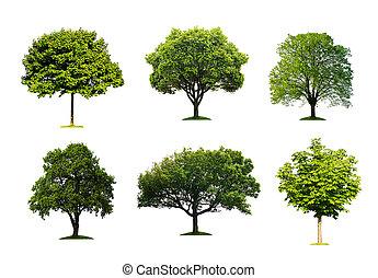 collection, isolé, arbre