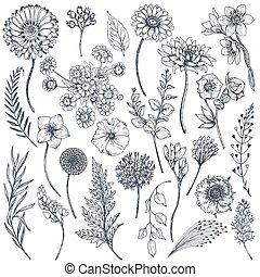 collection, usines, main, dessiné, fleurs
