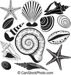 collection., vecteur, coquilles, seashells
