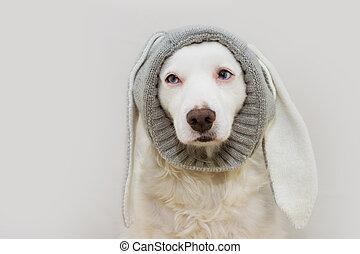 colley, paques, ears., blanc, dog., frontière, heureux, agréable, lapin, chiot, arrière-plan., isolé