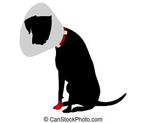 collier élisabéthain, chien, douleur, patte