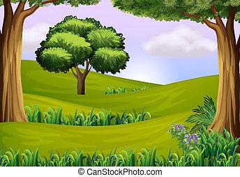 collines, arbres
