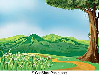 collines, chemin
