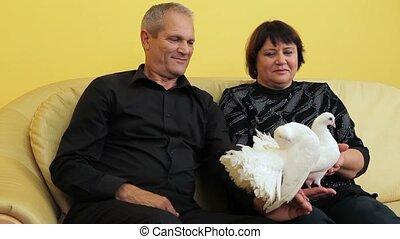colombes, couple, blanc, personnes agées