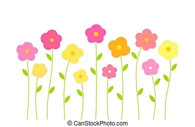 coloré, arrière-plan., fleurs, blanc, isolé, printemps