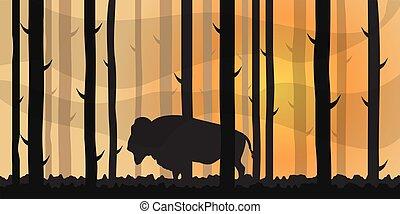 coloré, bison., paysage, illustration., forêt, vecteur