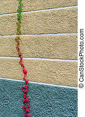 coloré, espace, mur, maison, text., leaves., automne, beaucoup, raisins, vide