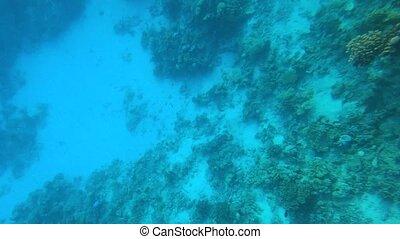 coloré, exotique, fishes., sous-marin
