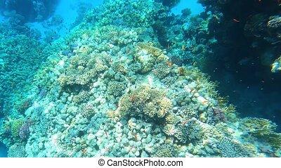 coloré, exotique, sous-marin, fishes.