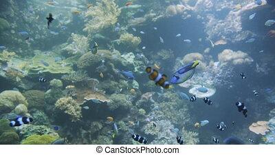 coloré, exotique, sous-marin, mer, fishes.