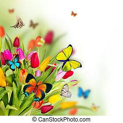 coloré, fleurs, papillons, exotique, tulipes