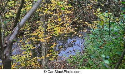 coloré, forêt, ruisseau, automne