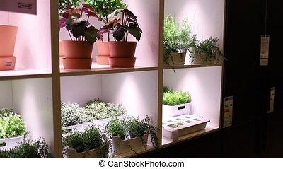 coloré, pots fleurs, éclairé, fleurs, affiché, étagère, usines