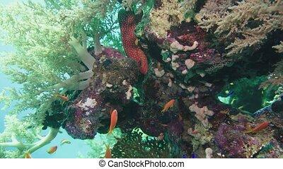 coloré, récif, scene., mer corail, jardin, marine., exotique, reef., sous-marin, fishes., seascape., fish