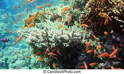 coloré, scene., exotique, récif, corail, fishes., reef., fish, marine., sous-marin, seascape., jardin, mer