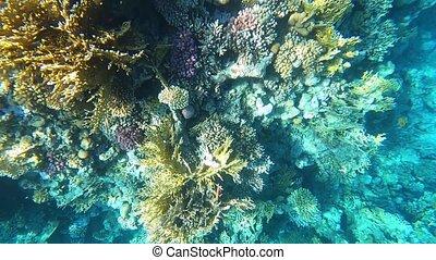 coloré, sous-marin, fishes., exotique