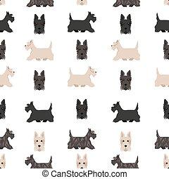 colors., adulte, manteau, seamless, chiot, différent, chiens, terrier, poses, scottie, modèle, écossais